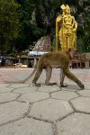 Postcard from Batu Caves 03 by JACAC