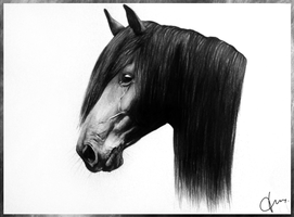 Friesian portrait by Twist-Again