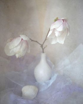 Magnolia dream... by Luciuuu