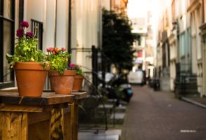 Flower Pot Alley by PrimalClone