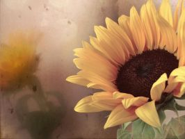 Sunflower version 1 by cridefea