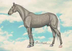 Orlov Trotter by overshined