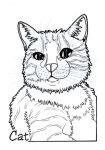 Cat by BeckyDIllustrations