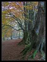 copper beech path by pinkzigzag