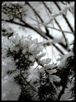 Ice Crystals II by Katiria-the-Cat