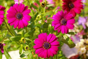 Flowers of the Polar Star II by expression-stock