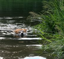 first swimming by Hechicero