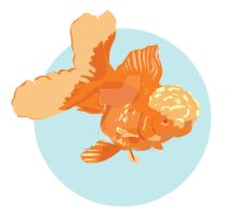 Oranda Vector by WithPencilInHand