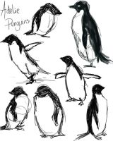 Adelie Penguins by Morgana-Pyrochan