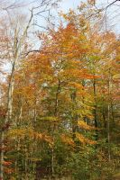 Leaves changing colours.. by frits10a