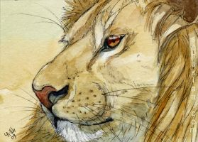 ACEO Lion portrait by sschukina