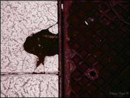 PHOTOGRAPHY- Ace of Spades by Fukai