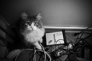 what? I just like cables ok??? by Bronx7