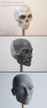 Head Sculpting progress by BishonenHouse