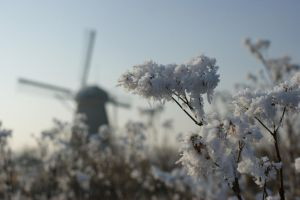 Frozen and windmill by picture-melanie