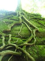 Roots by epil0gue