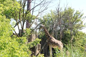 zoo Pic_29 by Mustang-Heart