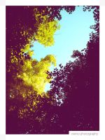 Blue Sky and Trees's Leaves I by Vianto