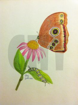 Butterfly by Ghiny