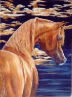 Arabian Horse by Jimmie-Carey