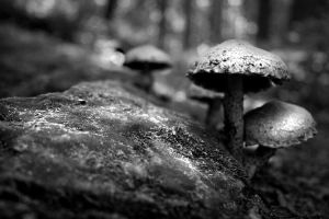 mushrooms by spako