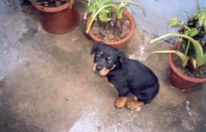 My Dog as a Puppy by coraelin