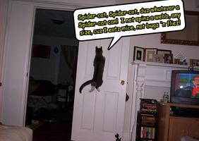 Lolcats - Spidercat by Darth-Silas