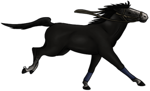Horse Contest Entry by thefireflii