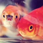 Shocked and Dismayed Fish by Cute-And-Bright