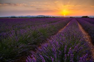 Provenza by Francy-93