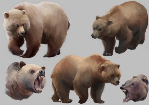 Bear Studies by Windmaker
