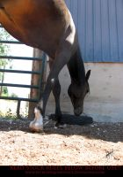 Unusual Angle 10 Sunchaser by AstriexEquineStock