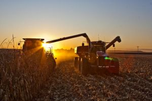 Harvest 2009 3 by cthacker