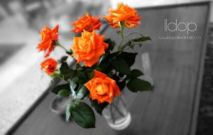 A special bouquet of roses by IIdop