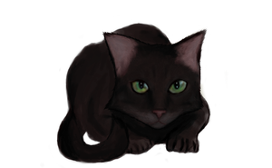 Chocolate Cat by Bengalensis