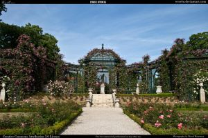 Rose garden 5 by Wess4u