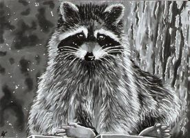 Racoon - ACEO by Sofera