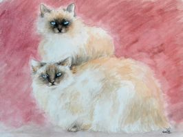 Cats portrait - watercolor by LauraMSS