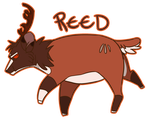 Fatty Reed by PenguinEatsCarrots