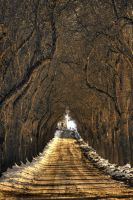 avenue... by Mark-Heather