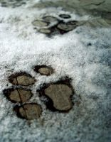 Mark of Winter by Photolooloo