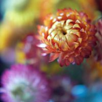 sunset flowers by cmykchicago