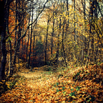 Memories of Autumn Leaves by BlueColoursOfNature