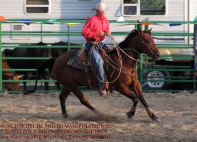 Rodeo 13-11 by AstriexEquineStock