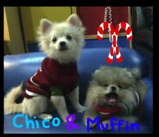 Chico and Muffin by AzuraJae