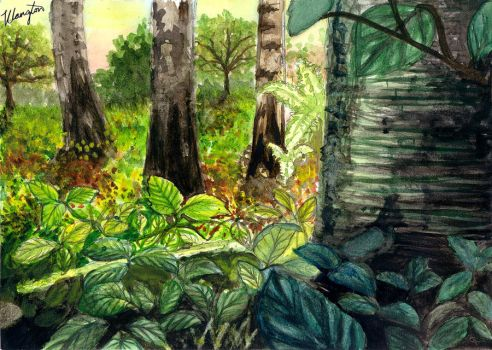 Woodland Floor  in watercolour by amber-glow