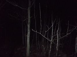In the Forest so dark by satanen