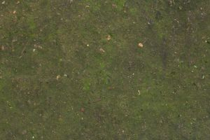 Concrete floor moss dirt texture 4770x3178 by hhh316