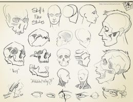 Skull Studies by CatCouch