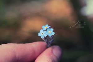 Tiny forget-me-not Bouquet by byNici